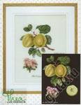 """Набор для вышивки крестом Набор для вышивания """"Натюрморт с яблоками"""""""
