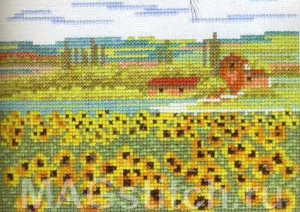 field - поле подсолнухов