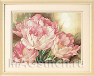 Tulip Trio - Трио тюльпанов