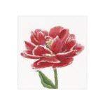Набор для вышивки крестом Красно-белый махровый ранний тюльпан