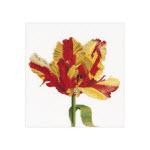 Набор для вышивки крестом Красно-желтый попугайный тюльпан