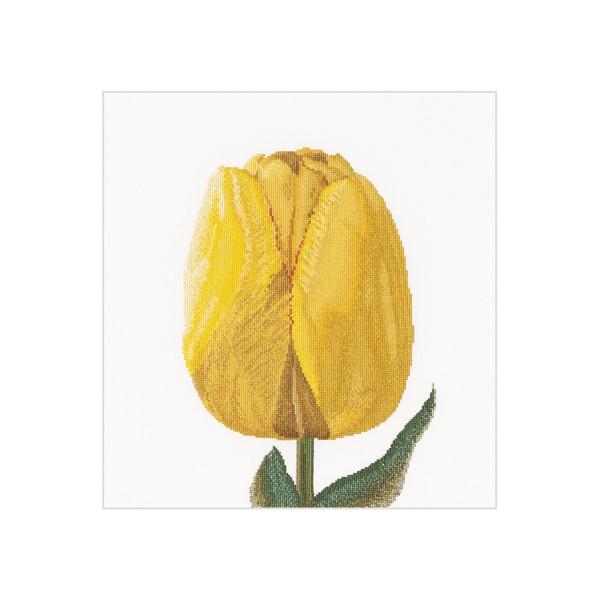 Желтый тюльпан гибрид