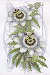 Набор для вышивки крестом Passion Flower