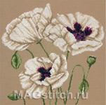 White Poppies - Белые маки
